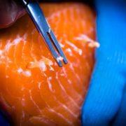 pin-boning salmon