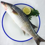 grey_mullet_whole