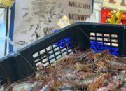 brown Shrimp-market