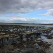 galway bay oyster farm 2