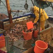 Galway bay prawns1
