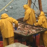 Galway bay prawns 2