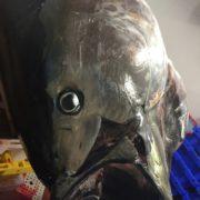 bluefin_tuna_head1