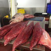 bluefin_tuna_processing3