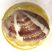 connemara_clam_closeup1