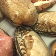 connemara_clam_closeup3