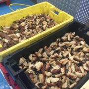 crab_claws_box