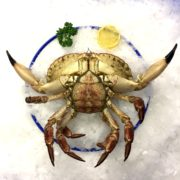 crab_plate1