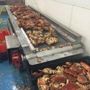 crab_sorting_3