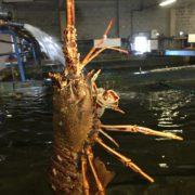 crayfish_pool1