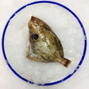 dory_trimmed_headoff