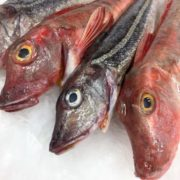 gurnard_whole_heads_ice