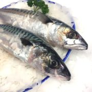 mackerel_whole_closeup1