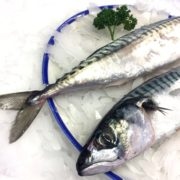 mackerel_whole_closeup2