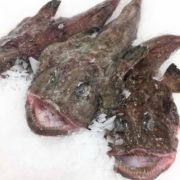 monkfish_small_whole_ice