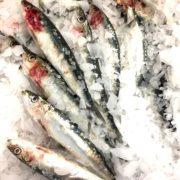 sardines3