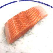 sea_trout_angle
