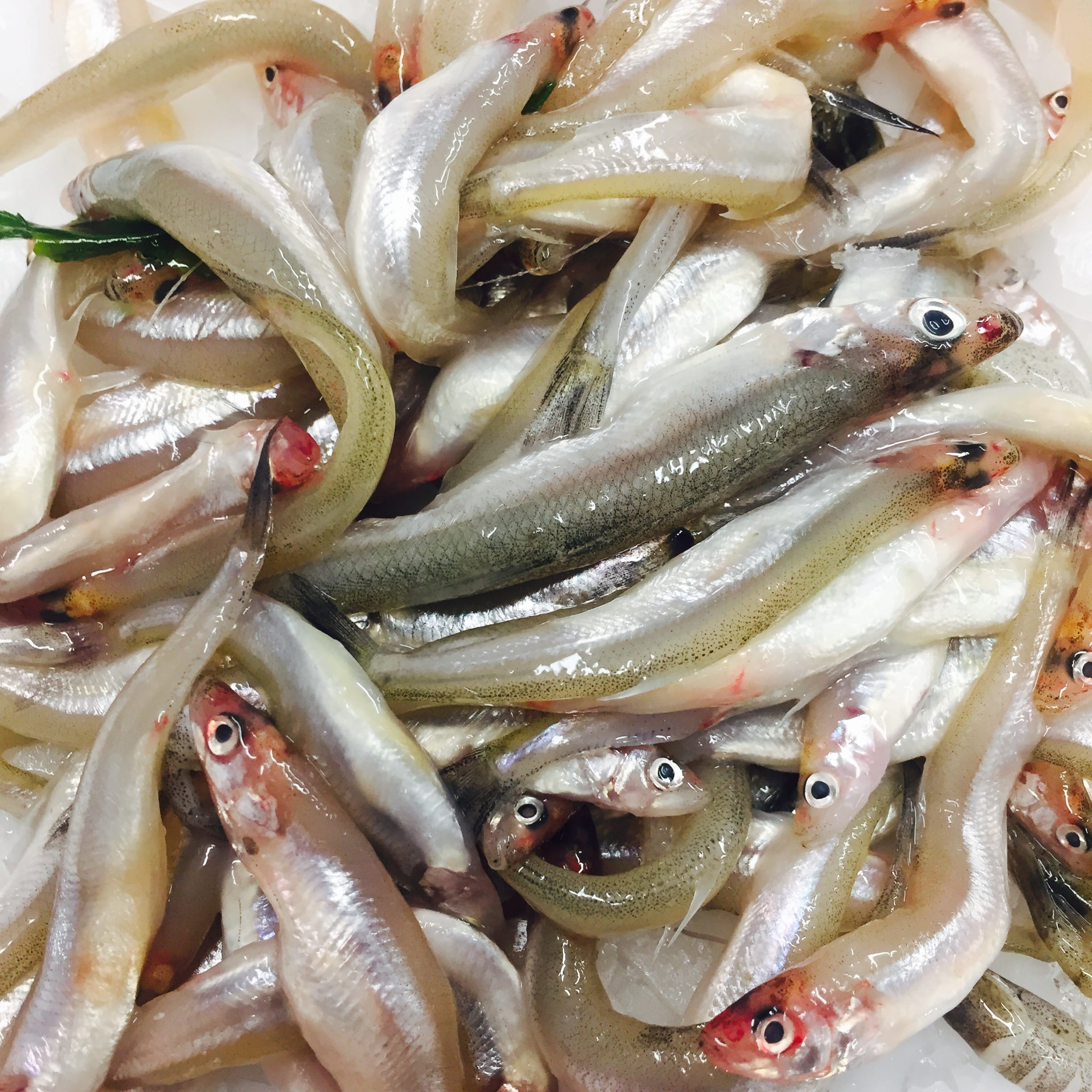 Whitebait eat more fish for Fish and more
