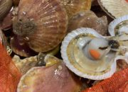 queen_scallop_whole_IMG-5313
