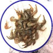 local_shrimp_1