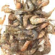 local_shrimp_2