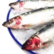 herring_import2
