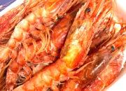 crimson_red_wild_shrimpIMG-2745
