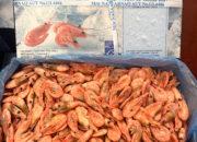 greenland_shrimp